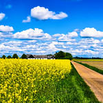 Clouds and rapeseed thumbnail