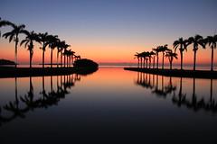 IMG_5071 (Steven Hessler) Tags: sunrise biscaynebay southmiami southflorida charlesdeering miamidadecountyparksandrecreations royalpalms stevenhessler canon60d deering estate