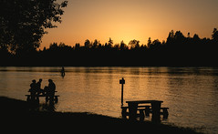 Derby Reach Regional Park Sunset (SonjaPetersonPh♡tography) Tags: langley bc britishcolumbia canada nikon nikond5300 fraserriver fraservalley sunset silhouettes regionalpark camping campground flooding water riverfront riverbank trails picnicarea nature trees beach birds canadageese goslings waterfowl waterreflections reflections langely townshipoflangley derbyreachregionalpark outdoors forest river floods bcparks park campgrounds waterfront