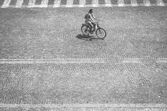 Single Lines (DarrenCowley) Tags: single flickrfriday cyclist verona italy road lines crossing cobbled symmetry minimal isolated street urban solo