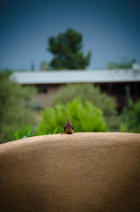 Rain in Tucson, Dove visits before the storm (Nobiefromcg) Tags: tucson rain arizona az monsoon nikon d7000 dove bird palmtree