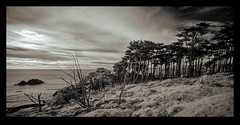 Lands End and Cypress Trees (Oscardaman) Tags: lands end cypress trees digital ira moment san francisco