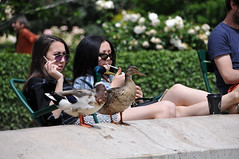 Two and two... (jeangrgoire_marin) Tags: paris ladies asian ducks birds duo relax lajoiedevivre cool sunny sunbathing tourists