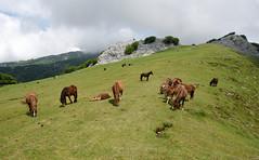 Ipargorta (Paulo Etxeberria) Tags: ipargorta ipergorta gorosteta gorbeialdea gorbeiakonaturaparkea parquenaturaldegorbeia larreak pastos pasture pâturage zaldiak caballos horses chevaux karst paisaia paisaje landscape paysage