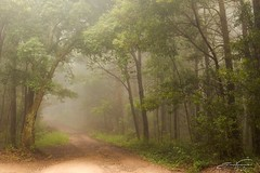 Misty Morning (jorgeverdasca) Tags: dream dreamland morninglight morning magiclight dark trees landscape spring woodland nature goth misty mist sintra portugal