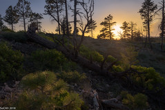 Spring Cleaning (sochhoeung) Tags: brycecanyonnationalpark brycecanyon bryce utah hikinutah exploring sunset sunsetlight sun sunlight lighting goodtime landscape utahlandscape highelevation elevation trees rocks aftersunset