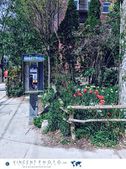 Payphone by Trinity Bellwoods Park in the city of Toronto, Ontario, Canada. (Vincent Demers - vincentphoto.com) Tags: amériquedunord architecture canada centreville centrevilledetoronto city cityoftoronto destinationdevoyage destinationtouristique downtown downtowntoronto idéedevoyage northamerica ontario parc park payphone phone photodevoyage photographiedevoyage publicphone queenstreetwest telephone toronto torontoqueenstreetwest tourism tourisme touristdestination travel traveldestination travelidea travellocation travelphoto travelphotography traveling travelling trinitybellwoods trinitybellwoodspark trinity–bellwoods trip téléphone téléphonepublic urbain urban ville villedetoronto vintage voyage voyager wanderlust ca