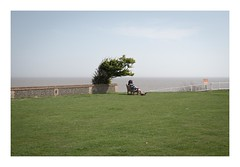 Taking in the View (John Pettigrew) Tags: candid 50mm d750 imanoot banal calm bench people tree seaside nikon space johnpettigrew documenting mundane