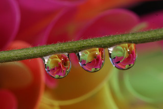 Nevena Uzurov - Droplets