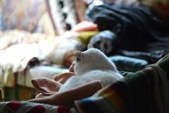 land of blanket (Danny W. Mansmith) Tags: home handmade upholstery kitties burienwashington dannymansmith alexisortiz