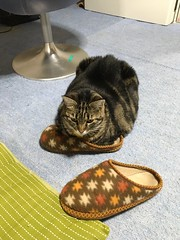 Tigger's Strange Hobby (sjrankin) Tags: 1june2018 edited animal cat tigger floor bedroom slippers chair yubari hokkaido japan