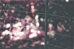 Barriers (OneBigStoopidMess) Tags: nikonf301 nikon lomography lomochrome lomopurple lomochromepurple 50mm nikonseriese 35mm film filmphotography photography london greenwich greenwichpark bokeh fence barriers nature londonfilmphotography filmphotographer filmslr f18