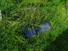 DSC00522 (joeymasong@yahoo.com) Tags: jaypee cemetery 墓地 公墓 陵園 memorialpark 紀念墓園 puntod grave graveyard 墳墓 掃墓 pandayan meycauayan 梅卡瓦延 meycauayancity 梅卡瓦延市 梅卡瓦延城市 bulacan 布拉幹省 philippines 菲律賓