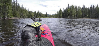 Rudy the Paddle Dog