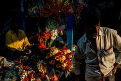 Men and Flowers-DSC_1185 (thomschphotography3) Tags: men oldman flowers market light shadow dark colours colourful asia india kolkata calcutta flowermarket streetphotography