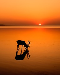 Sundown (vaibhav.pandeys) Tags: longexposure nikon natgeowild canada alberta travel wildlife reflection water nature sundown dusk sunset