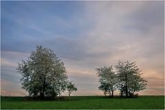 Weiß steht ihnen gut! (linke64) Tags: thüringen deutschland germany natur landschaft bäume frühling wolken wiese himmel blüten weis