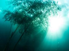 Kreidesee (Knipsbildchenknipser) Tags: hemmoor kreidesee see tauchen diving scuba scubadiving wald forest baum bäume tree uw underwater unterwasser farbe color fisheye