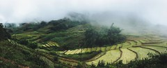 Terrace rice fields in Northern Vietnam (@Jujutravel) Tags: sapavalley sapa rice green mountains northernvietnam vietnam ricefield terracefield