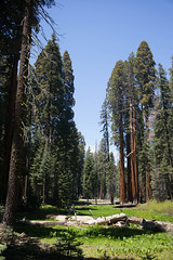 Circle Meadow, Sequoia National Park, 2018 (screaming_monkey) Tags: published processed