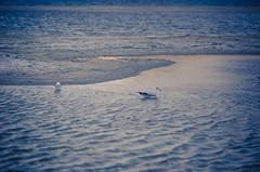 Pangong Tso (prashantby) Tags: leh ladakh pangong tso lake