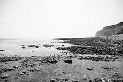 Seaford 2018-48 (AntonioA) Tags: green seaford uk cuckmerehaven summer beachcliff sevensisters
