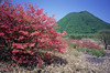 つつじのはら (t_mimizuk) Tags: film minolta tc1 flower spring azalea red gunma japan 榛名山