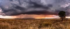 Storm cell pano (Kent Wilkins) Tags: panoramic landscape storm cell rural proston queensland australia canon rain sunset cloudsstormssunsetssuntises