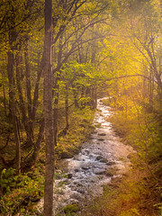 Golden river (kellypettit) Tags: iphonex river goldenlight sunset japan stream color