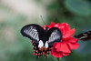 143577a7-d0e1-44b3-93ff-785a9f21d011 (allanodyne) Tags: insects butterfly antenna beautiful focus fly
