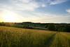 Lumière du soir (Croc'odile67) Tags: nikon d3300 sigma contemporary 18200dcoshsmc paysage landscape nature coucherdesoleil ciel sky