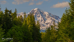 Mount Rainier from Kautz Creek (Loowit Imaging - Steve Rosenow, Photographer) Tags: mountrainier mtrainier tahoma mountrainiernationalpark nikon nikond5500 nature scenic scenery volcano volcanic lake forest katuzcreek
