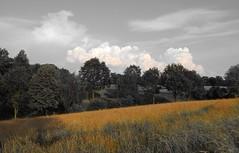 Up in the hills (Ostravak83) Tags: ostrava 2018 nikoncoolpix červen july léto summer příroda nature venkov countryside výškovice southside kopec hill pole field stromy trees selektivníbarva selectivecolour nebe sky krajina landscape mraky clouds odpoledne afternoon