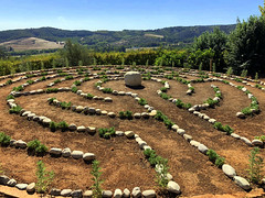 Newly Planted Maze (RobW_) Tags: maze thehydro lindida stellenbosch western cape south africa saturday 17mar2018 march 2018