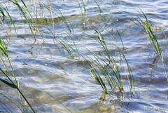 Шацький Національний Природний Парк Озеро Пісочне Прозора вода InterNetri  Ukraine 247