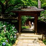 Gate of Main Hall of Tokeiji Temple, Kamakura : 北鎌倉・東慶寺 thumbnail