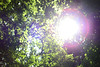 1PRO_0673 (Radu Pavel) Tags: radu radupavel pavel fotononstop cosmos ©radupavelallrightsreserved ©radupavelallerechtevorbehalten ©radupaveltodoslosderechosreservados ©radupavel版権所有 nature natur naturaleza 自然 colours farben colores 色 green grün verde 緑 light licht luz 光 tree baum árbol 木 verano summer sommer 夏 木漏れ日 2018 leaves hojas bläter 葉 lensflare blendenfleck destellodelente