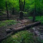 Hiking the Whitetail Trail in Little Bennett Regional Park thumbnail