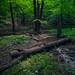 Hiking the Whitetail Trail in Little Bennett Regional Park