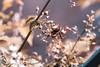 27 de mayo. (Gabriela Varela Photography) Tags: flower macro abeja avispa bee canon canonaddict canonista photo photography photoshoot photos photoshop lightroom