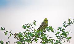 0531_Bird_2 (adam.leaf) Tags:
