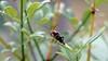 Mein Jubiläum.....Foto nr. 2000. (dl1ydn) Tags: dl1ydn 2000 käfer nature bokeh dof garden garten natur animal