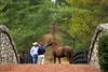 Giant's Causeway (creepy_coyote) Tags: giantscauseway horseracing stallion horse farm ashford kentucky coolmore