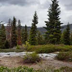 Nearby Trees and then Far-off Hillside Views of Giant Sequoia National Monument thumbnail
