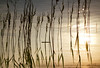 Magic does exist! (*Lolly*) Tags: sunset water lake straw reed sunlight backlit backlight reflection sweden europe canon 50mm outdoor nature summer