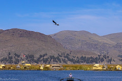 On floating Islands / На плавучих островах (Vladimir Zhdanov) Tags: travel peru andes altiplano titicaca lake water wave boat puno landscape bay people seagull bird grass tree mountains urosislands sky