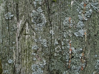 Caters Beam south post A and lichen