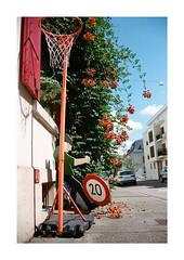 no name (analog surfing) Tags: red street basket ball sing 20 kid play roses color analog film scan nikonf100 kodak portra