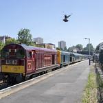 Trains and pigeons at Lawrence Hill, Bristol thumbnail