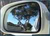 Reflections (2) (margaretpaul) Tags: reflections waac weekendassignmentandcontest mirror tree gumtree eucalyptus